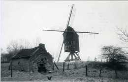 IMPE Bij Lede (O.Vl.) - Molen/moulin - Historische Opname Van De Gewezen Tukmolen Met Bakhuisje In 1978. TOP !! - Lede