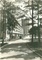 Cpsm   -      Sceaux - Rue Jean Giraudoux          V1232 - Sceaux