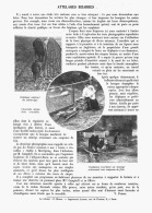 ATTELAGES BIZARRES    1909 - Transports