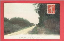 CAYEUX SUR MER 1907 BRIGHTON BOIS DE SAPINS CARTE COLORISEE EN TRES BON ETAT - Cayeux Sur Mer