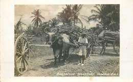 CARTE PHOTO TRINIDAD - Trinidad