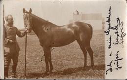 ! Alte Fotokarte 1915, Alfred Henkel Divisionsarzt 39. Division, Pferd, Horse, Gel. Nach Rengshausen - Guerra 1914-18