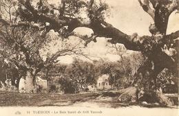 CPA Algérie - Tlemcen, Le Bois Sacré De Sidi Yacoub - Tlemcen