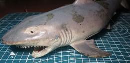 SQUALO - Fish