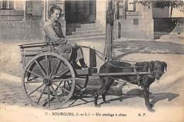 CHIENS DE TRAINEAUX- BOURGUEIL- UN ATTELAGE A CHIEN - Chiens
