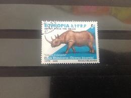 Ethiopië / Ethiopia - Zwarte Neushoorn (5) 2005 - Ethiopia