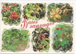 Baies Sauvages Myrtille Fraise Framboise Mure Châtaigne Délices Et Parfums D'une Nature Préservée (cp Vierge) - Plantes Médicinales