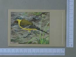 BIRDS - MOTACILLA FLAVA -  YELLOW WAGTAIL -   2 SCANS  - (Nº24714) - Birds