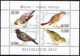 BULGARIA \ BULGARIE - 2014 - Oiseaux Chanteur - PF** - Blocs-feuillets