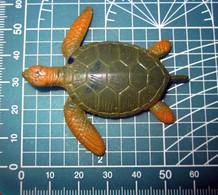 TARTARUGA - Turtles