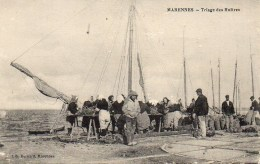 17 MARENNES  Triage Des Huîtres - Marennes