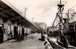 56 LORIENT  Port De Pêche - La Criée - Lorient