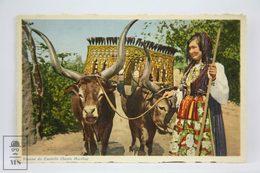 Postcard Portugal - Vianna Do Castello  - Santa Martha - Cows - Vasconcellos - Tabacaria Africana - Viana Do Castelo