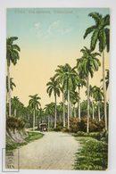 Postcard Republic Of Cuba - Una Carretera - Car On Cuban Road - Nº 71 - Early 20th Century - Cuba