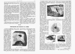 PHOTOGRAPHIE DES INSECTES DE L'AMBRE   1907 - Minerales & Fósiles