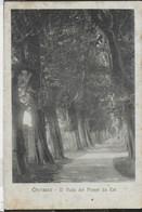 PIEMONTE - CHERASCO - IL VIALE DEI PIOPPI - FORMATO PICCOLO - EDIZ. CELLARIO - VIAGGIATA 1920 - Italie