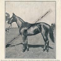 1926 : HIPPODROME DE CHANTILLY, Esclarmonde Gagnante Du Prix De La Rochette, Marcel Boussac, Course Hippique - Vieux Papiers