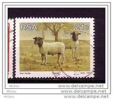 RSA, Afrique Du Sud, South Africa, Mouton, Lamb, Sheap - Ferme