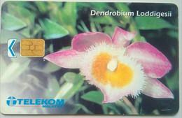 RM20 Dendrobium Loddigesii - Malaysia