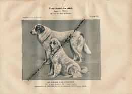 1907 : Chien, CHIEN DES PYRENEES, Planche Du Journal Des Eleveurs L'Acclimatation - Animaux
