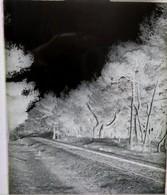 Plaque Photo En Verre.Hyères.La Ligne De Chemin De Fer Des Salins.   (10) - Plaques De Verre