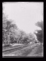 Plaque Photo En Verre.Hyères.La Ligne De Chemin De Fer Des Salins. Avec TRAIN.   (11) - Plaques De Verre