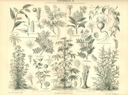 BERT MEYERS, GERMAN MEYERS KONVERSATION LEXIKON 1890, QUINTA EDIZIONE, PIANTE MEDICINALI Litografia - Lessico