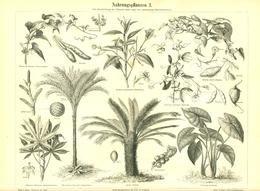 BERT MEYERS, GERMAN MEYERS KONVERSATION LEXIKON 1890, QUINTA EDIZIONE, PIANTE ALIMENTARI Litografia - Lessico