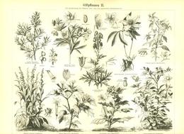 BERT MEYERS, GERMAN MEYERS KONVERSATION LEXIKON 1890, QUINTA EDIZIONE, PIANTE VELENOSE Litografia - Lessico