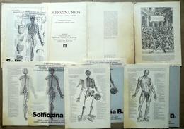 Andrea Vesalio Quattro Tavole Anatomiche Pubblicità Solfiozina Midy Anni '50 - Vecchi Documenti