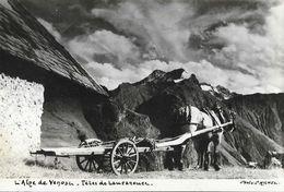 L'Alpe De Venosc, Têtes De Lauranoure, Attelage - Carte Photo De L. Michel - Tampon Château De Bourg D'Aru - France