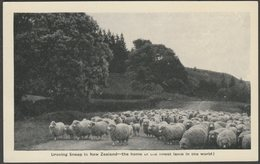 Droving Sheep In New Zealand, C.1920s - Postcard - New Zealand