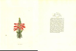 GEORGE COOKE, BOTANICAL CABINET, VOL. 1, TAVOLA 86, 1827, ERICA SANGUINEA Original Hand-Colored Lithograph - Old Books