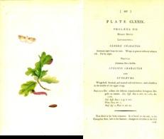 EDWARD DONOVAN, THE NATURAL HISTORY OF BRITISH INSECTS, VOL. 5, TAVOLA 179, 1796, PHALAENA OO Original Hand-Colored Lith - Libri Antichi