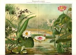 BERT MEYERS, GERMAN MEYERS KONVERSATION LEXIKON 1890, QUINTA EDIZIONE, AQUATIC PLANTS Cromolitografia - Lessico