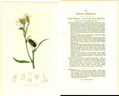 JOHN CURTIS, BRITISH ENTOMOLOGY, TAVOLA 80, 1825, PARNUS IMPRESSUS Original Hand-Colored Lithograph - Old Books