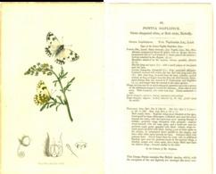 JOHN CURTIS, BRITISH ENTOMOLOGY, TAVOLA 48, 1825, PONTIA DAPLIDICE Original Hand-Colored Lithograph - Old Books