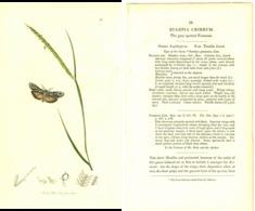 JOHN CURTIS, BRITISH ENTOMOLOGY, TAVOLA 56, 1825, EULEPIA CRIBRUM Original Hand-Colored Lithograph - Old Books