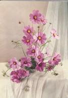 FLEURS----bouquet De Cosmos--voir  2 Scans - Flowers