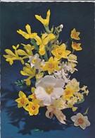 FLEURS----bouque D'iris, Primevères, Jonquilles---voir  2 Scans - Fleurs