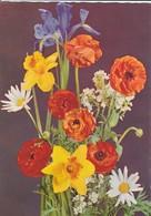 FLEURS----fleurs D'iris, Marguerites, Renoncules---voir 2 Scans - Fleurs