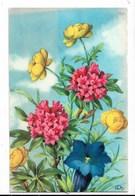 Fiori - Piccolo Formato - Non Viaggiata - Flowers