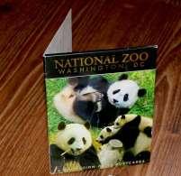 National Zoo, Washington. A Set Of. Big Panda. - Washington DC