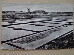 44      MESQUER    MARAIS  SALANTS  DE  KERCABELLEC - Mesquer Quimiac