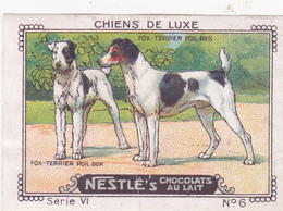 CHROMO 4 X 6 Animal Chien De Luxe Dog Hund Fox-Terrier Poil Dur Et Poil Ras - Nestlé