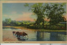 FILIPPINE  - FEATHERY - BAMBOO- 1954 -colors, Animated, Traveled, POSTE MANILA TARGHETTA, For MILAN (ITALY), - Filippine