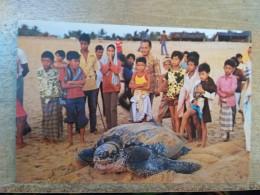 Malaysia Old Post Card 1990 Turtle Watching Sea Animal Terengganu Trengganu - Malaysia