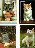 CHATS /  Lot De 45 Cartes Postales Modernes écrites - Cartes Postales