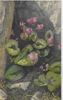 AK 0016  Cyclamen Europaeum  - Künstlerkarte Um 1907 - Blumen