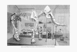 L'ELEPHANT De DURFORT (TARN)   1894 - Midi-Pyrénées